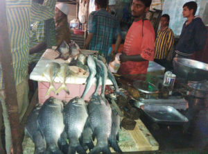 Fresh fish...ready to get chopped and deep fried (Tilak Nagar)