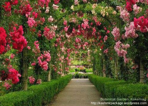 Inside the Kokernag Garden