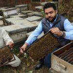 Punjab-beekeeping, a family business.