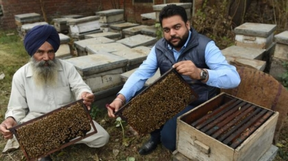 Punjab-beekeeping, a family business.