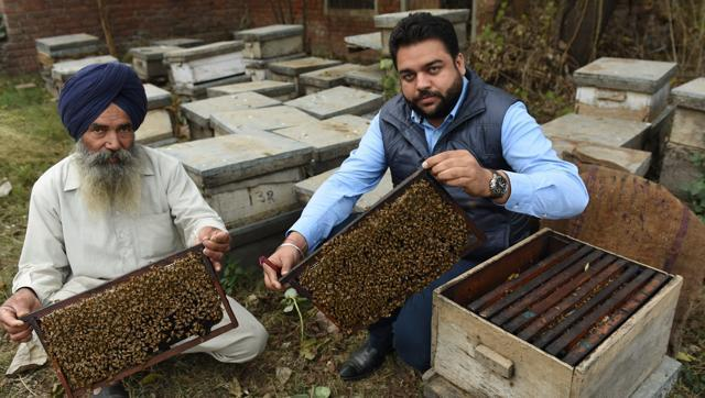 Punjab-beekeeping, a family business