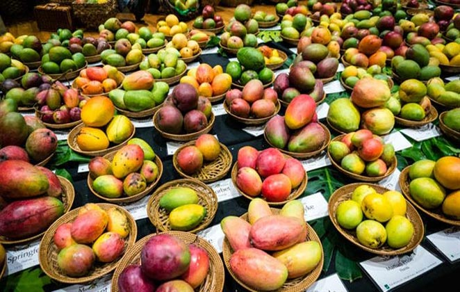 Variants at Mango Festival