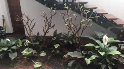 Gardening Banani Vista