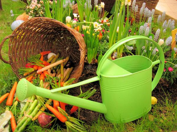A garden in making