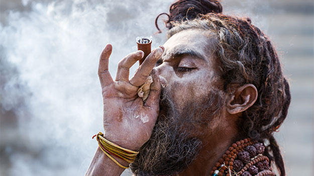Aghoris consume marijuana