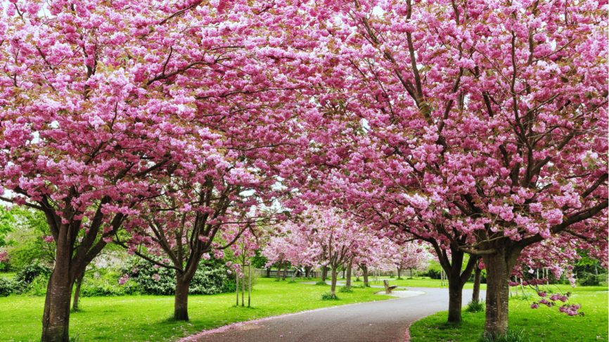 top 7 activities to do in cherry blossom festival shillong