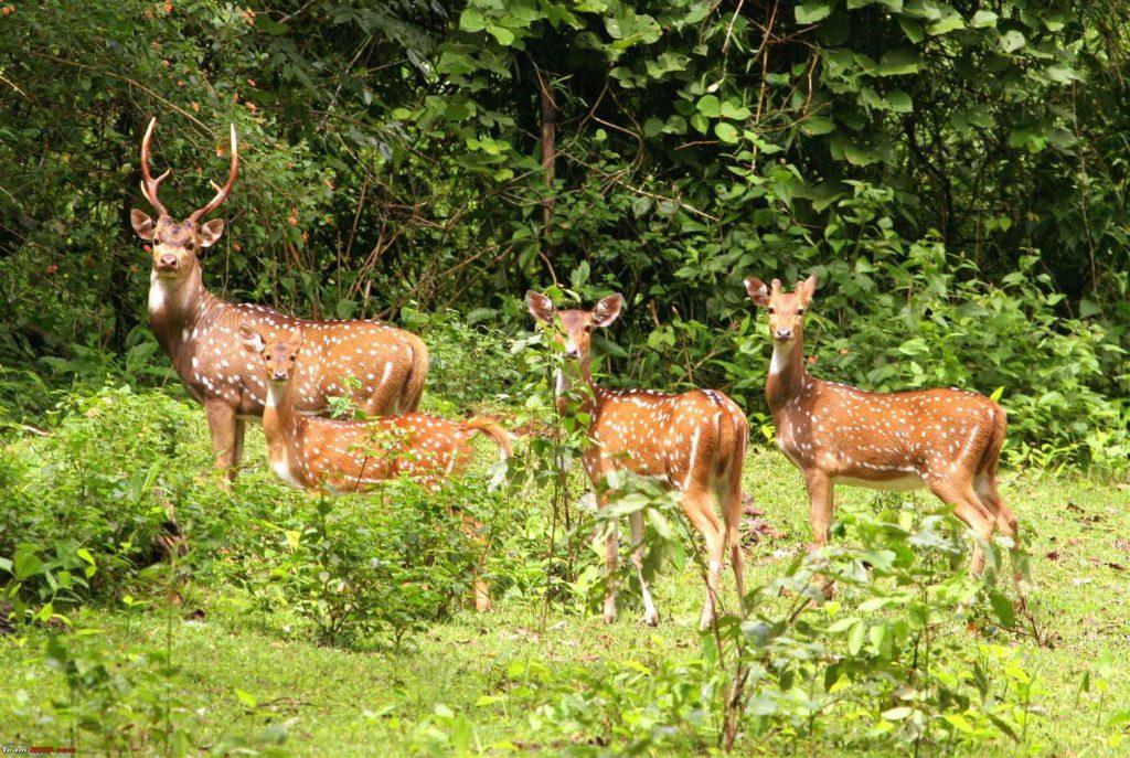 Majuli Island Forest, Bananivista