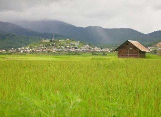 Ziro Valley in Arunachal Pradesh, Bananivista