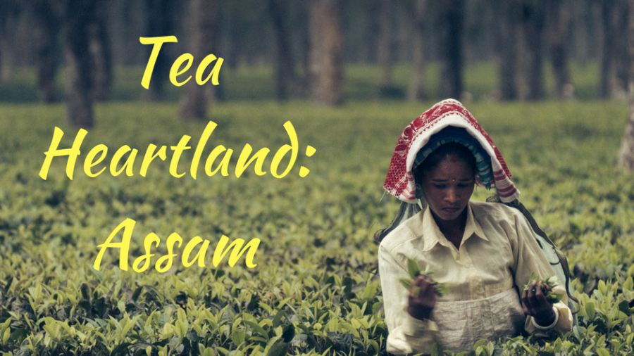 Each tea leaf has an incredible story to tell