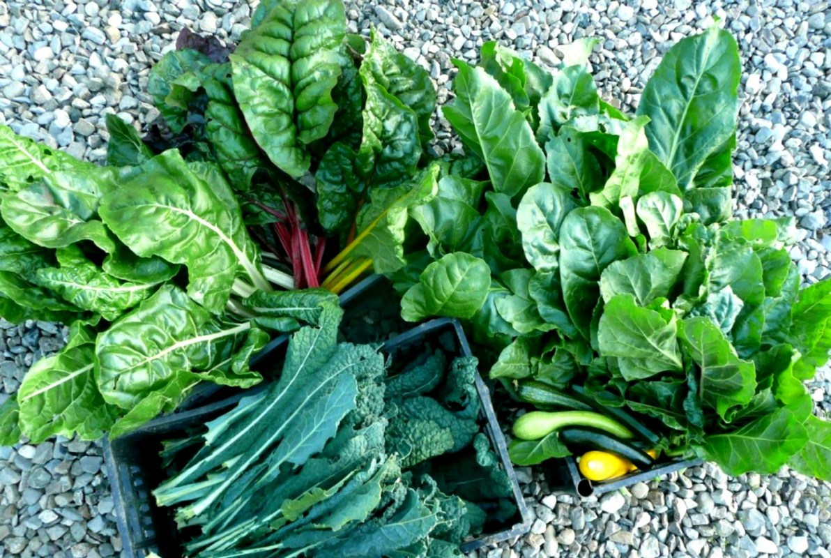 Add Greens in your diet