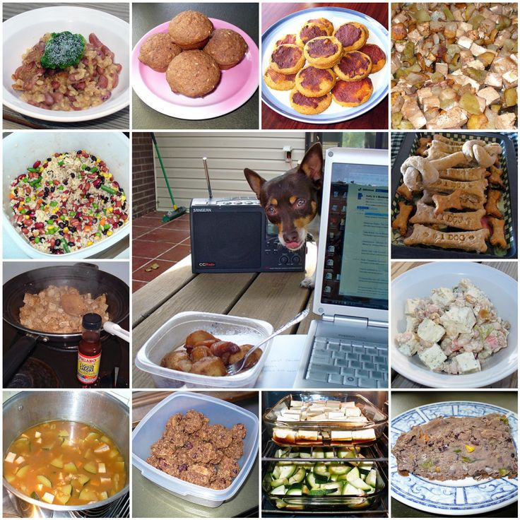 Many pet owners are turning to the homecooked variety image source: www.pinterest.com