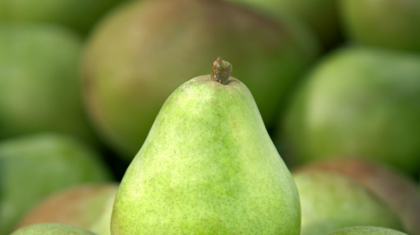USA Pears